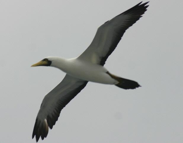 2012-10-25-birds001
