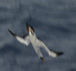 2012-10-25-birds01