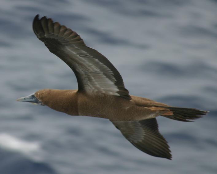 2012-10-25-birds04