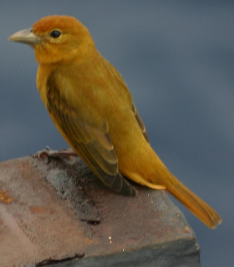 2012-10-25-birds05