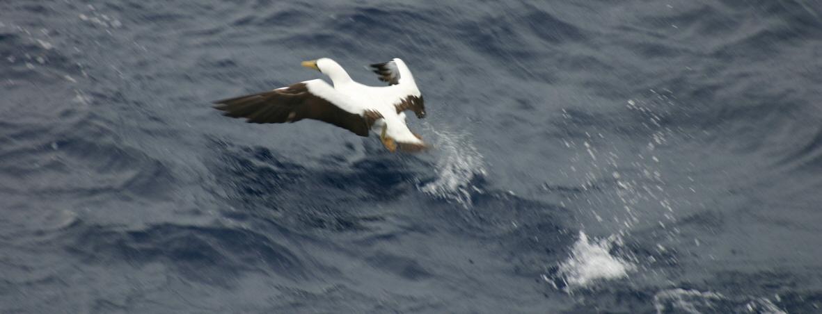 2012-10-25-birds06