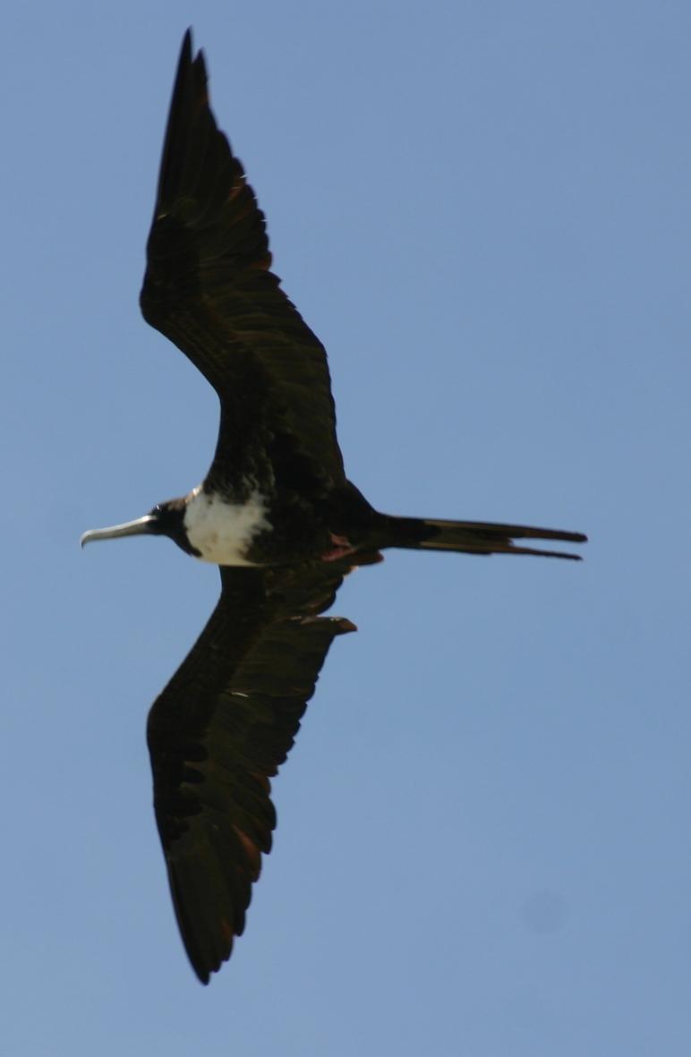 2012-10-25-birds08