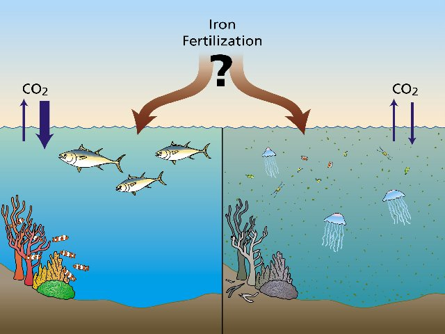 iron-fertilization